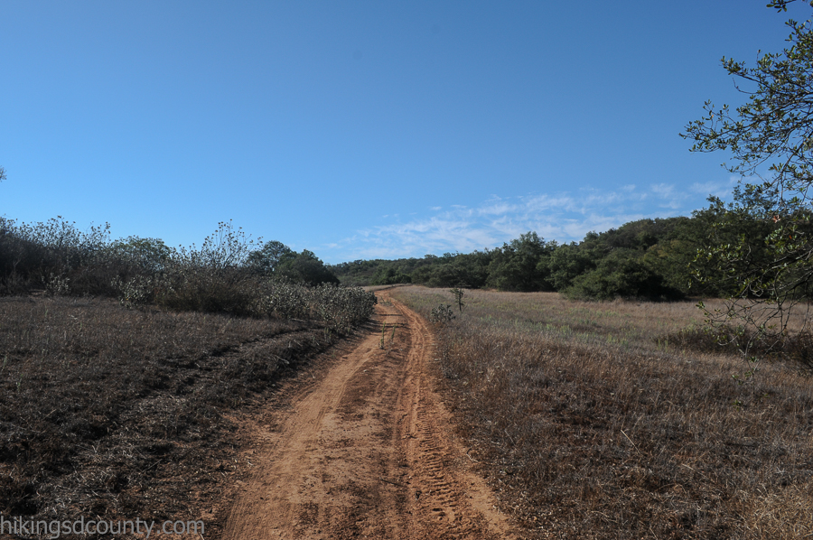 The Engelmann Oak trail