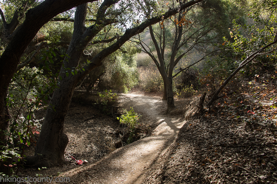 An awesome oak grove lies deep within Tecolote Canyon