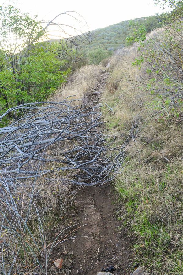Obstacles to be overcome along the trail to Oakzanita Peak