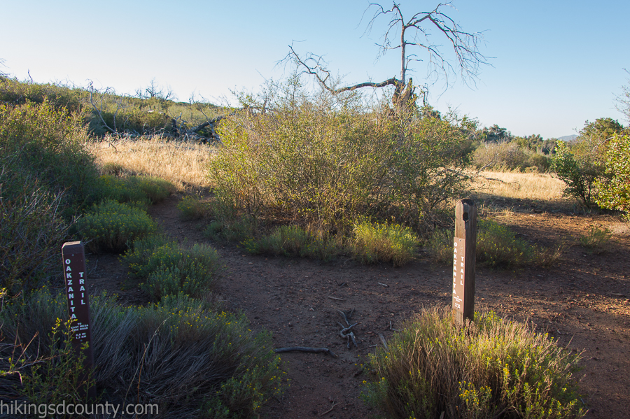 Junction for the Oakzanita Peak trail