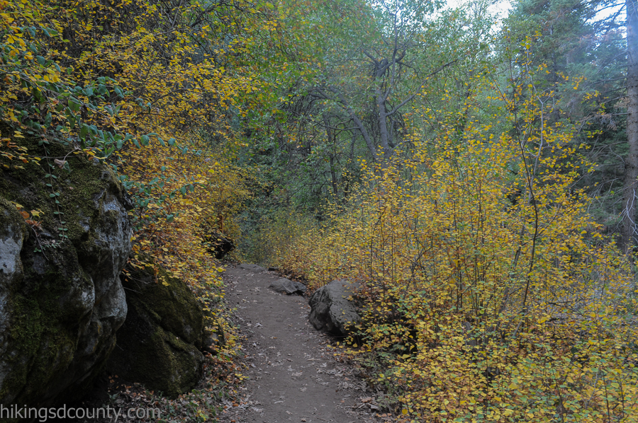Fall color abounds in Palomar State Park