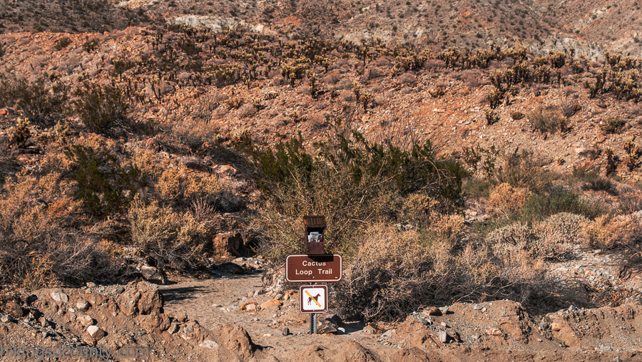 The Cactus Loop trailhead is immediately across the street from Tamarisk Grove Campground