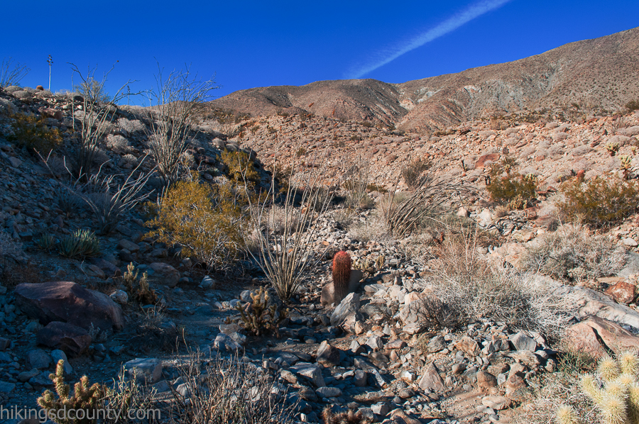 The Cactus Loop Trail