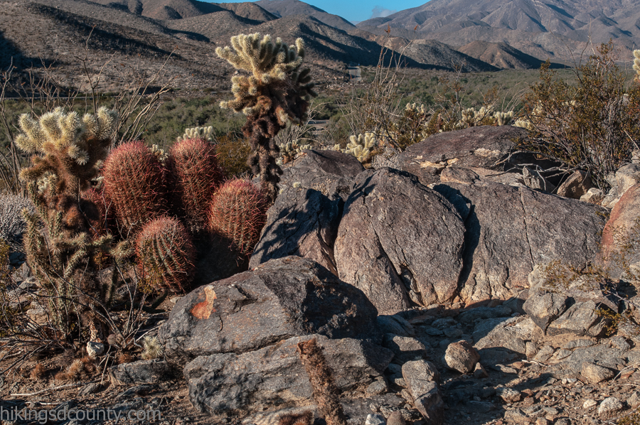 A variety of cacti can be found along the Yaqui Well nature trail