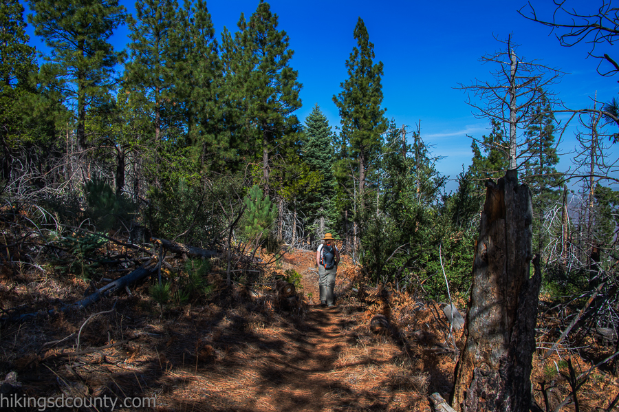The Conejos trail