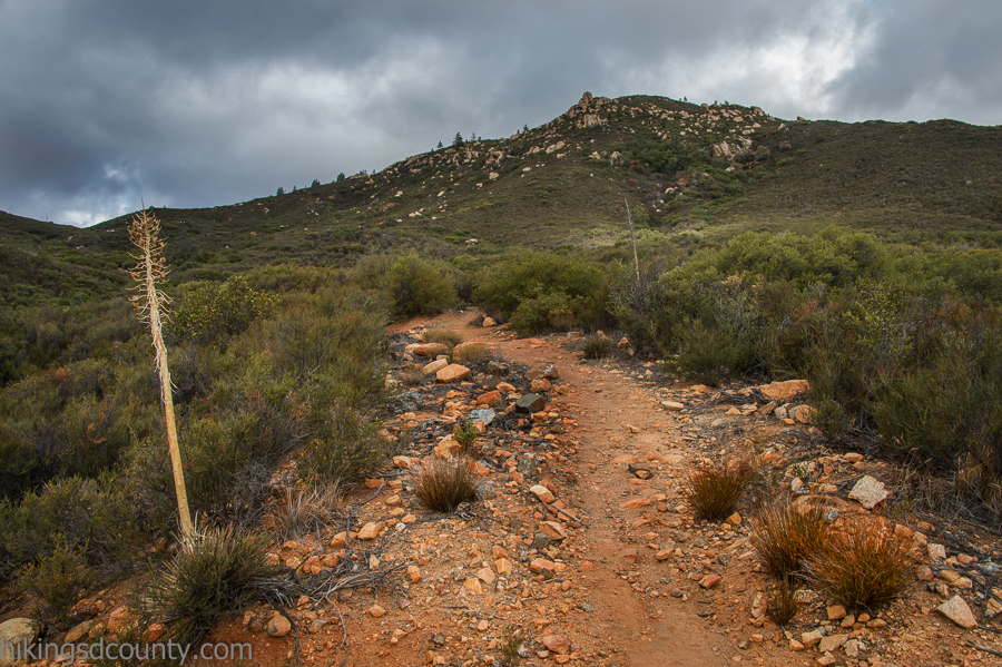 Heading uphill on the Espinosa trail