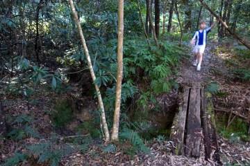 dsc00548 lr Mueller Track, St Ives Wildflower Garden
