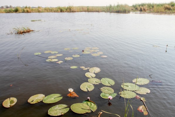 Linyanti River