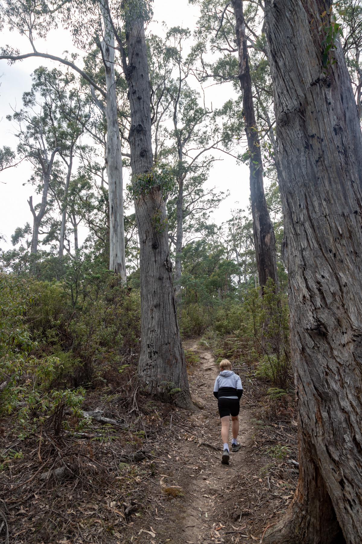 img 9764 lr Mount Maria hike (Maria Island)