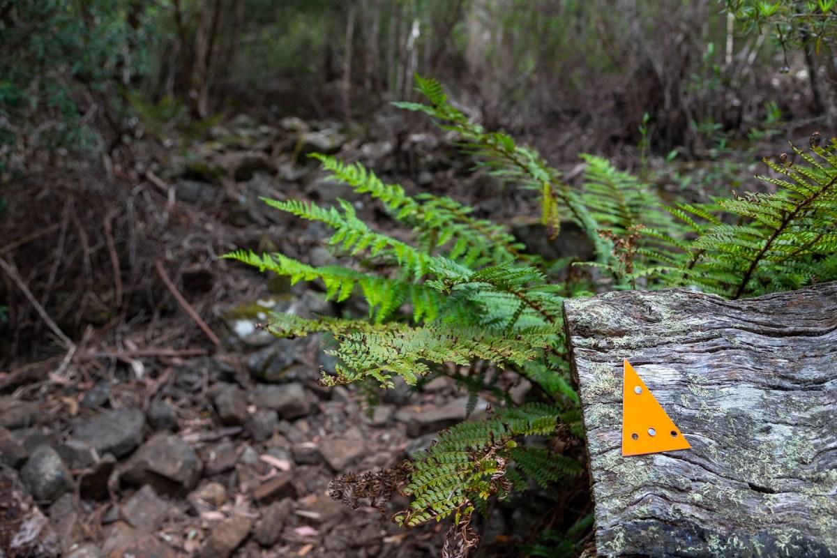 img 9775 lr Mount Maria hike (Maria Island)