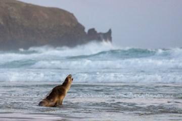img 1228 lr Allans Beach (Otago Peninsula)