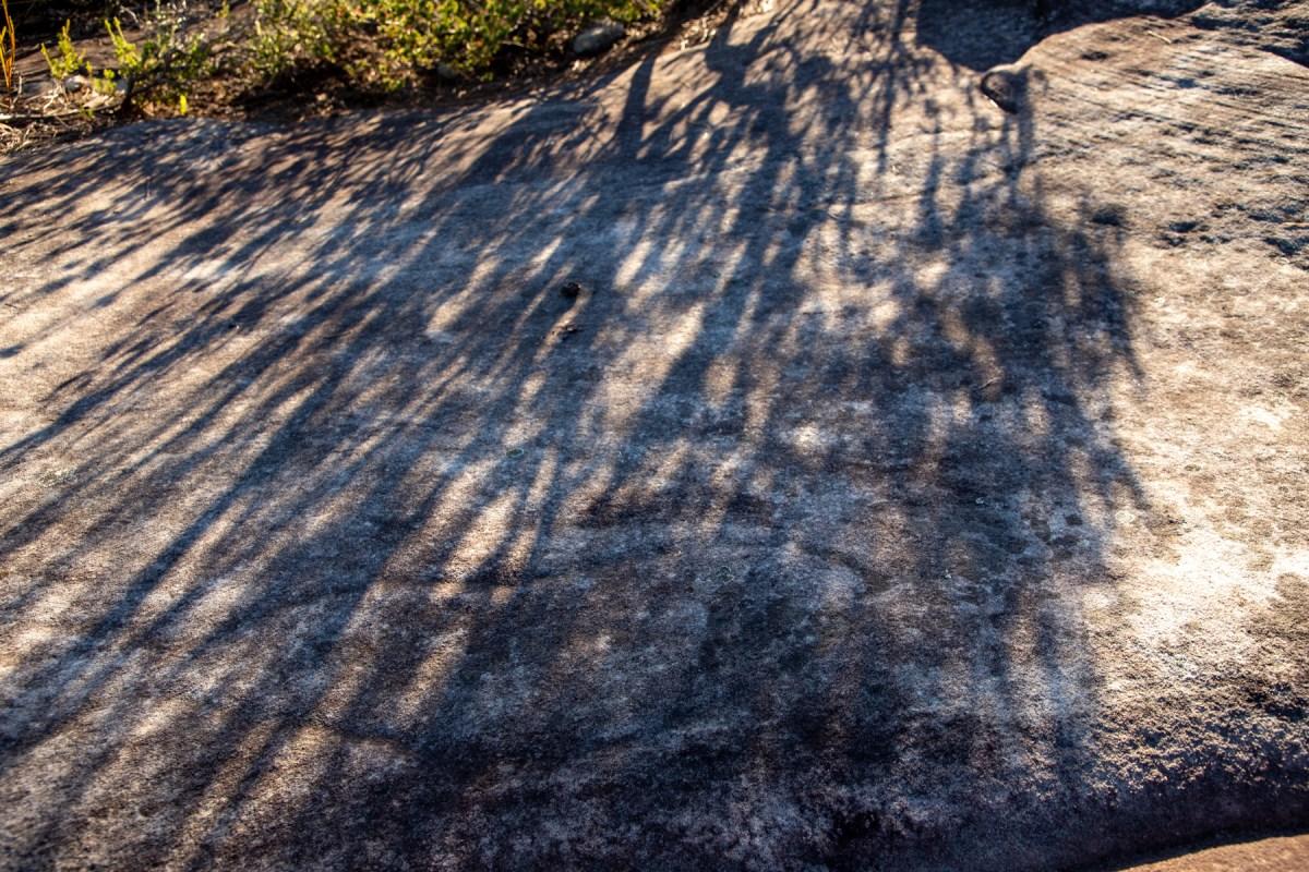 img 4106 lr Guide to West Head bushwalks