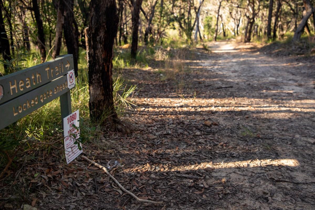 img 6646 lr Heath Trail and Bare Creek Loop (Garigal NP)