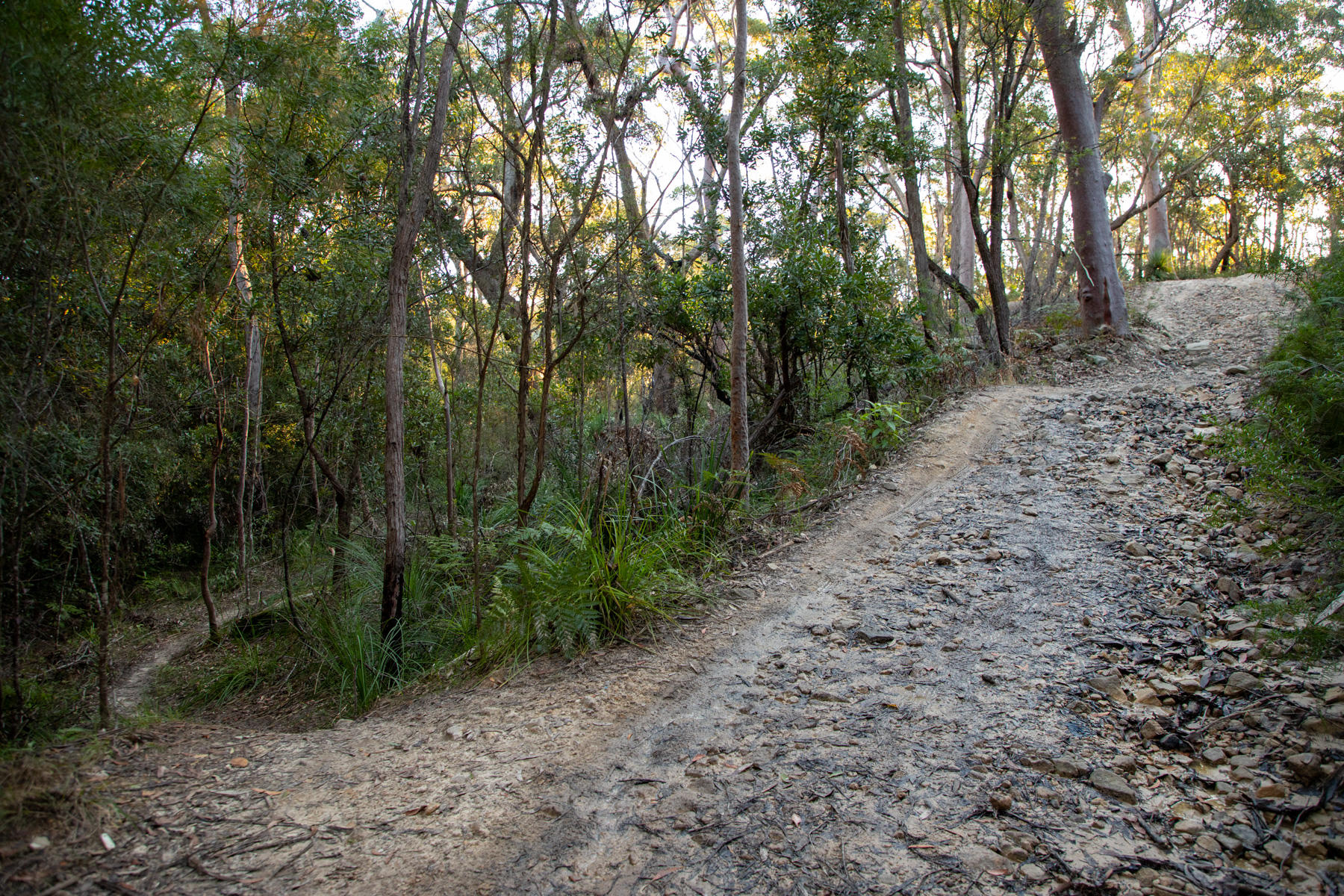 img 6681 lr Heath Trail and Bare Creek Loop (Garigal NP)