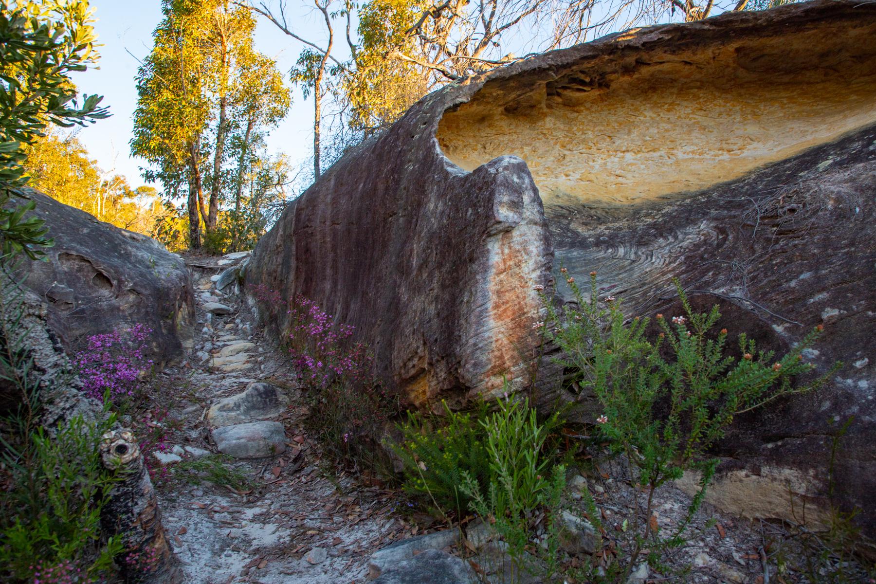 img 6717 lr Heath Trail and Bare Creek Loop (Garigal NP)