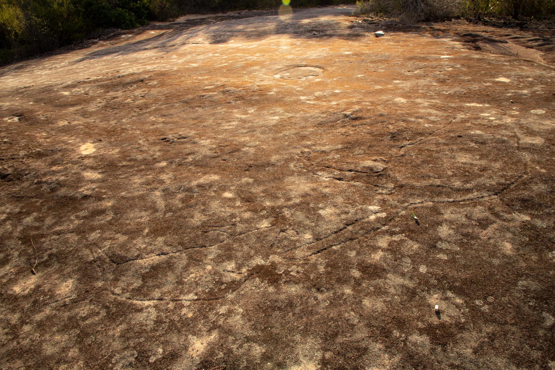 img 6795 lr Caleyi Trail Kangaroos