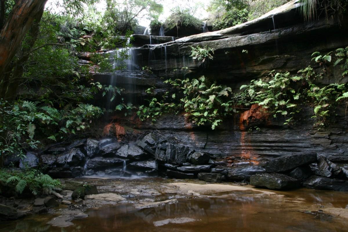 img 1691 Piles Creek Loop (Brisbane Water NP)