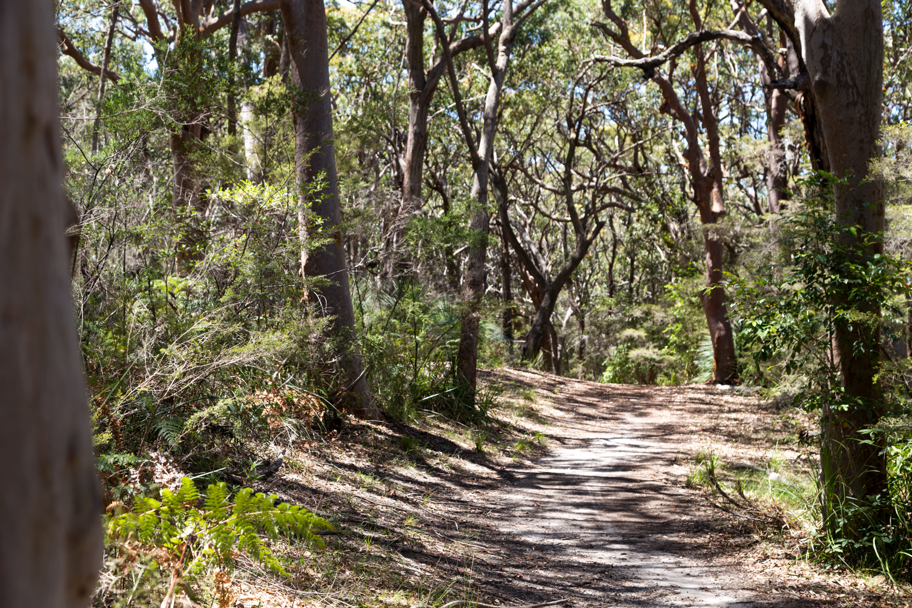 mg 6742 lr Guide to Bouddi National Park