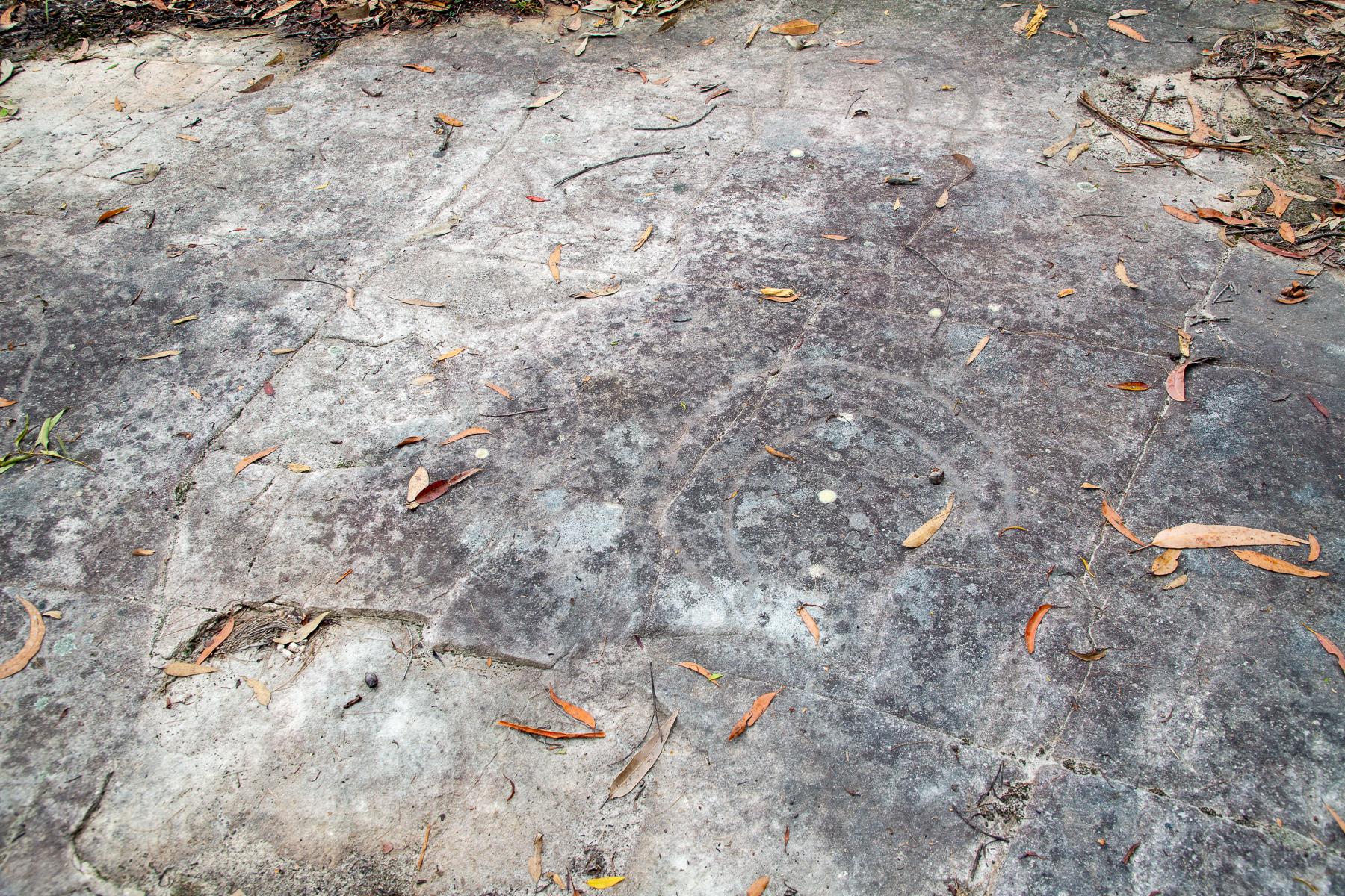 awat5989 lr 248 Track Kangaroos