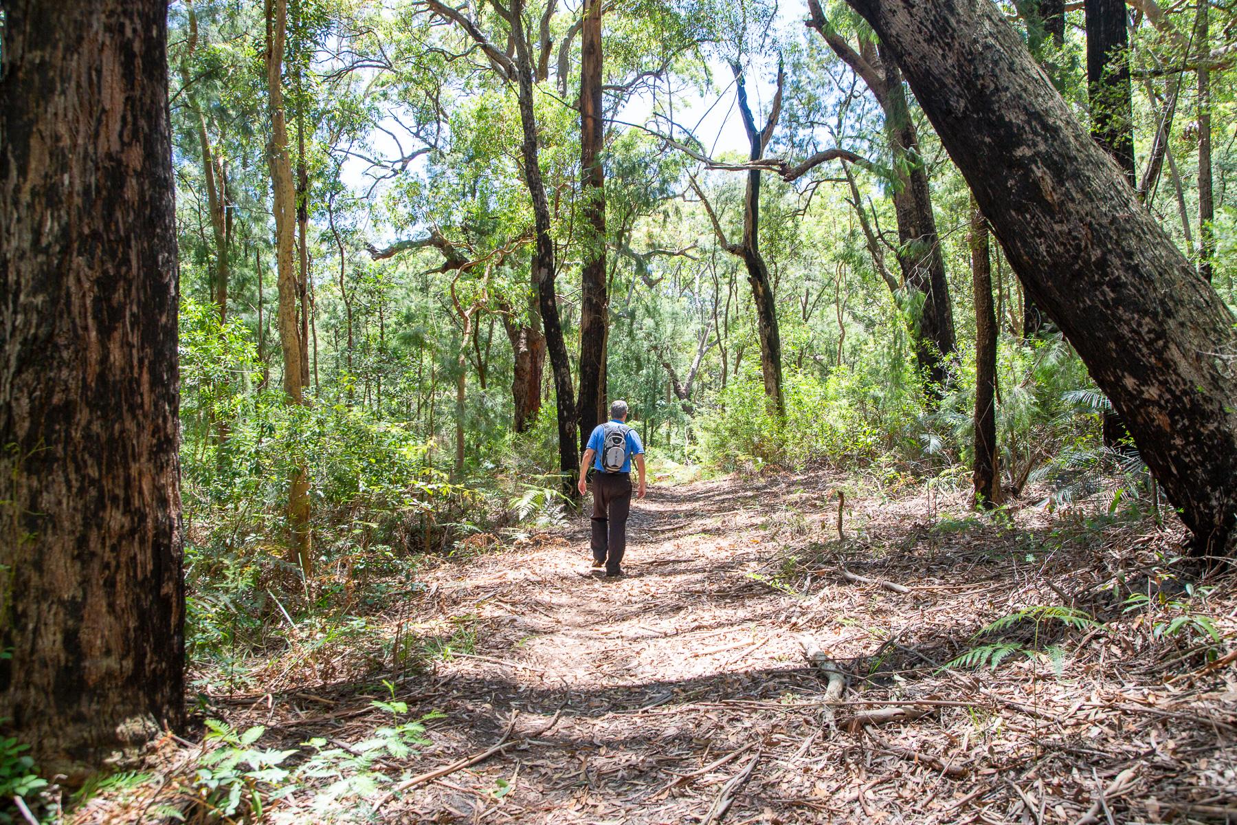 awat6165 lr Guide to Bouddi National Park