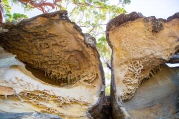 awat6481 lr Exploring Brisbane Water with Sydney Rock Art