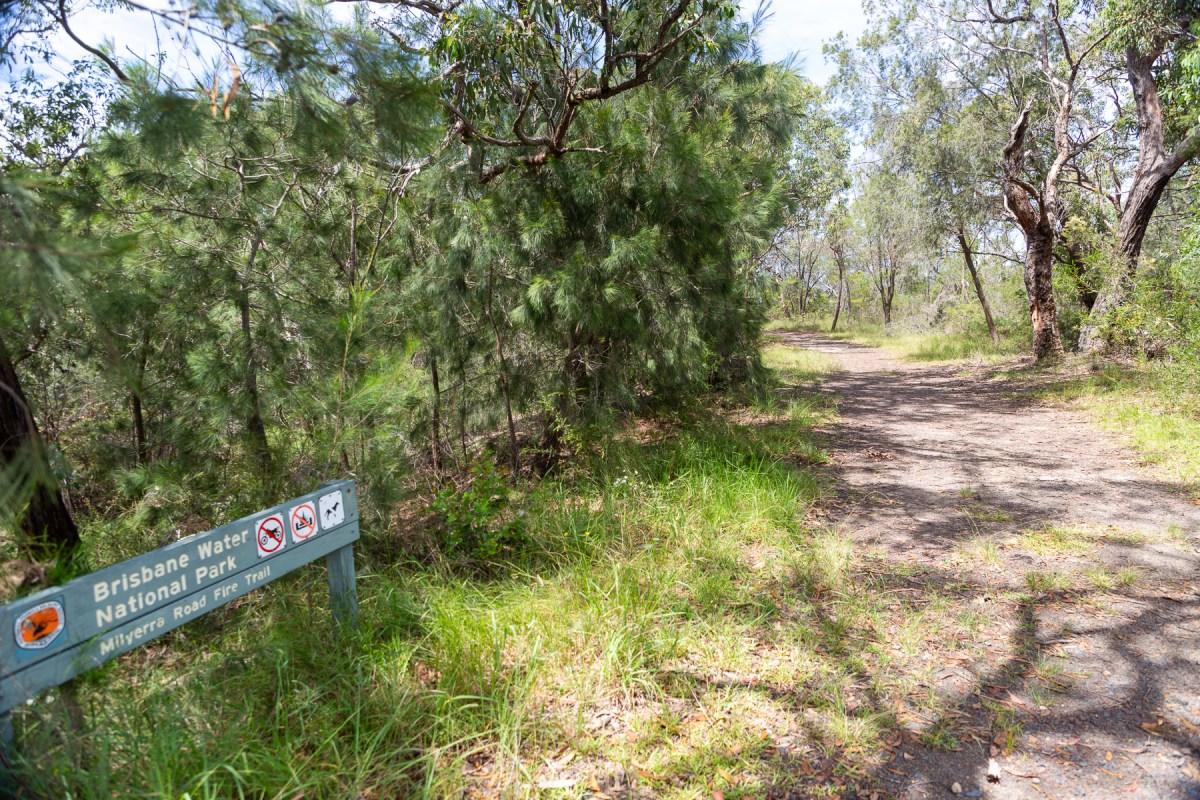 awat7675 lr Tassie Tigers & River Monsters on the Milyerra Trail
