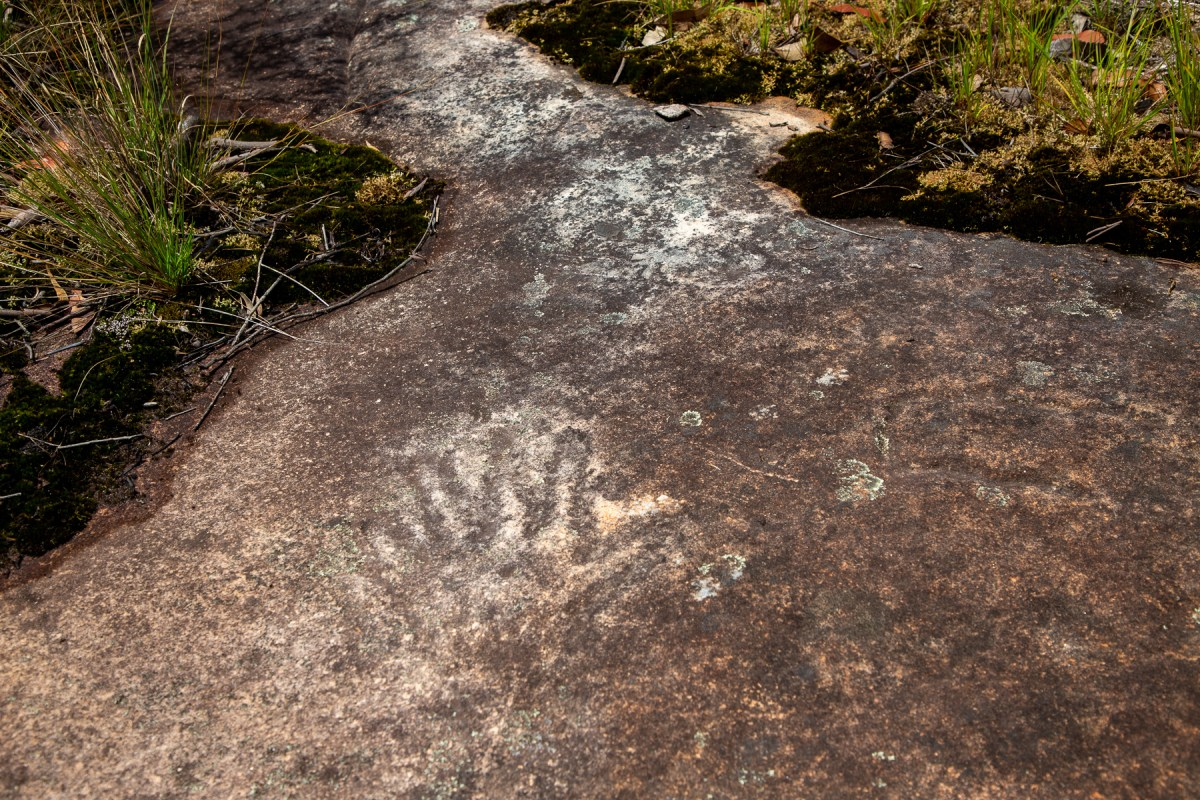 awat7680 lr Tassie Tigers & River Monsters on the Milyerra Trail