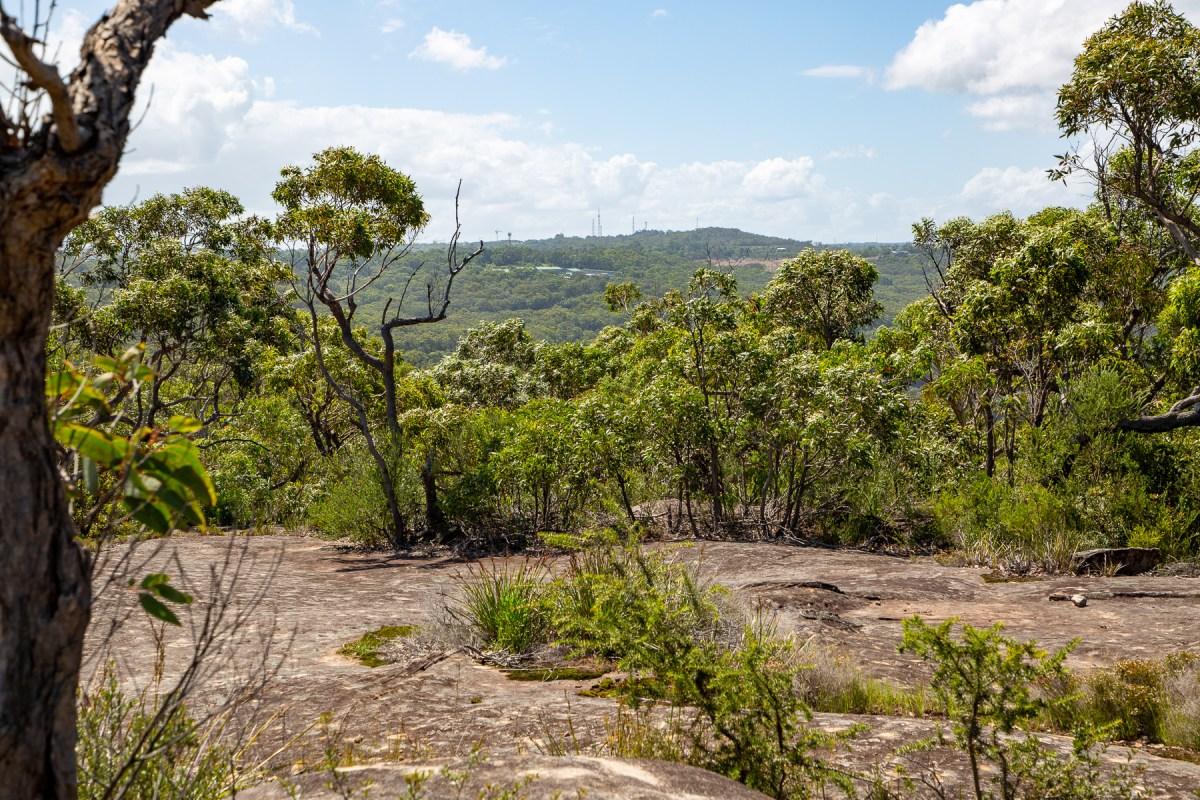awat7947 lr Tassie Tigers & River Monsters on the Milyerra Trail