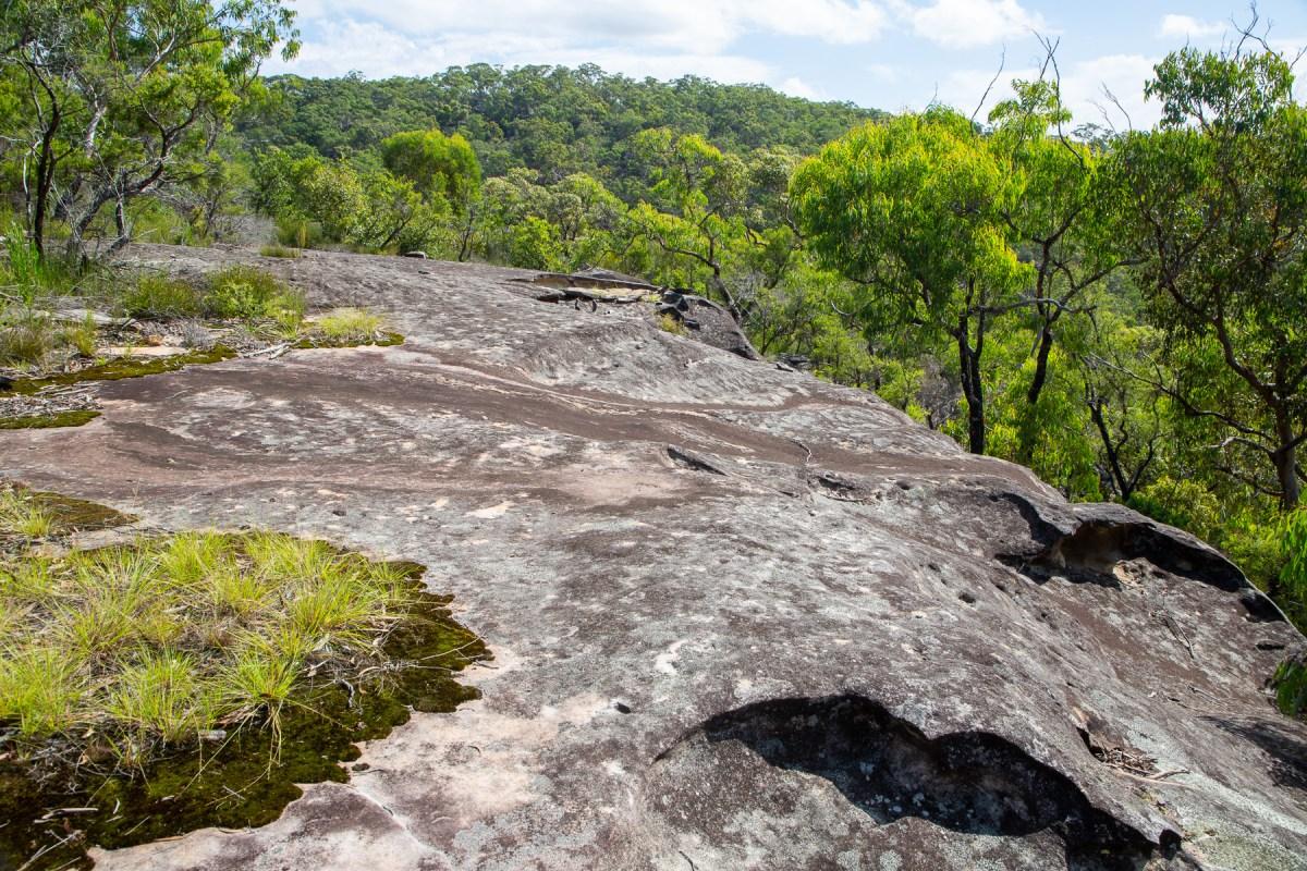 awat8425 lr Berowra Waters (Turner Firetrail) Rockshelter