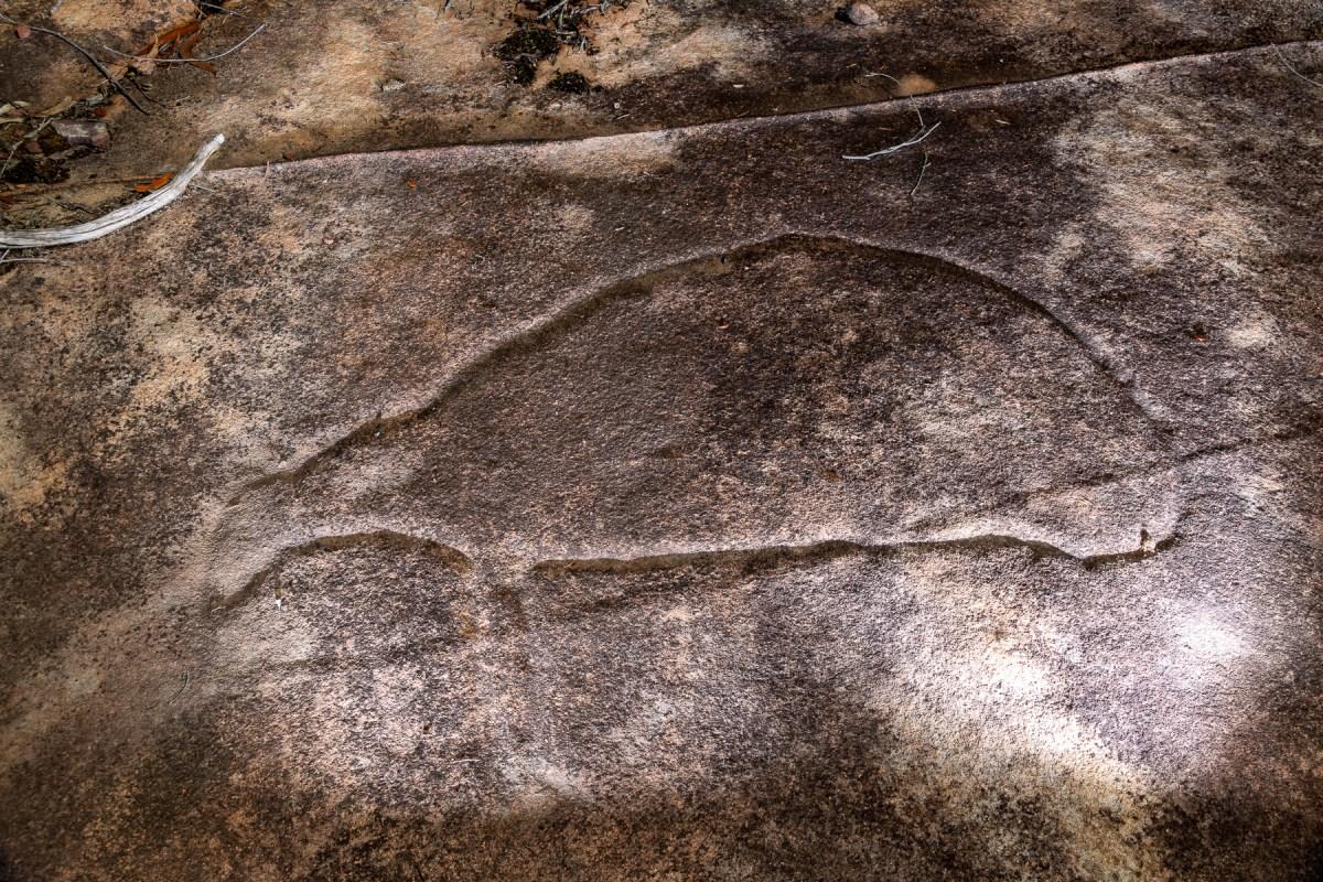 awat8762 lr Aboriginal Art - Ku-ring-gai Chase
