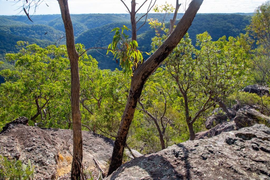 View from Gundah Ridge Track