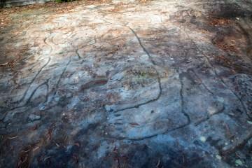 AWAT1354 LR Mt Ku-ring-gai Aboriginal site