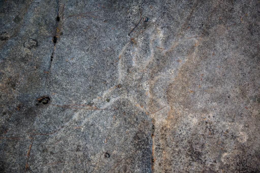 AWAT7989 LR Mooney Mooney Aboriginal Area