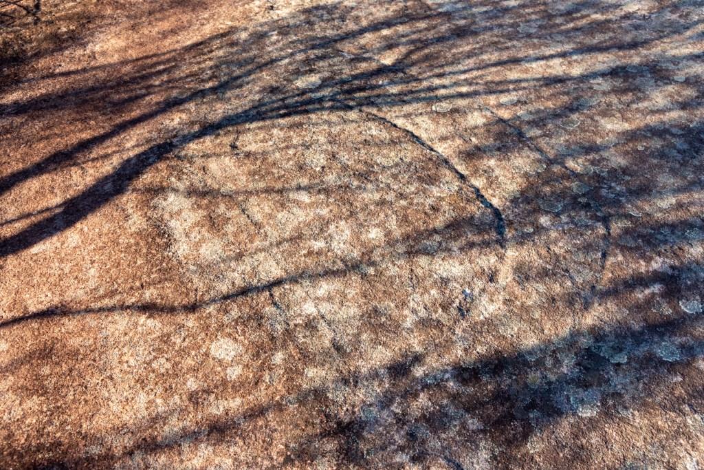 IMG 5796 LR Bluff Track Whale