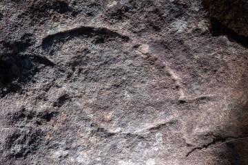 Basin Bazza Fish Aboriginal engraving site on Basil Trail
