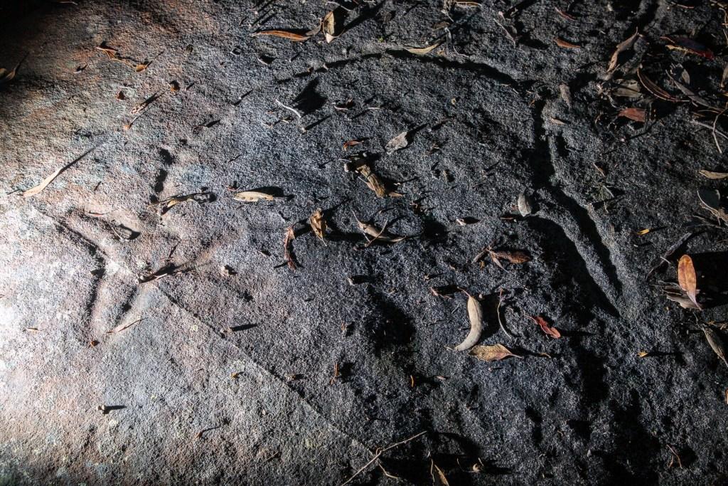 AWAT4868 LR Terrey Hills Aboriginal Engravings