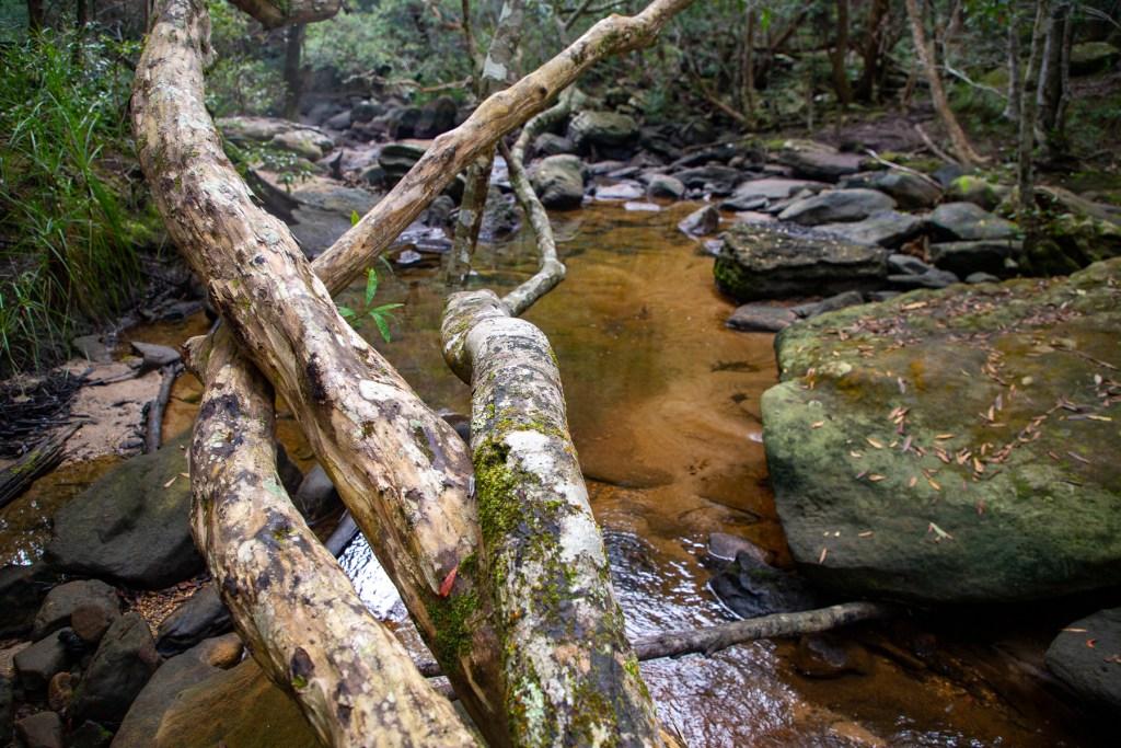 Sams Creek, on Sams Creek Loop