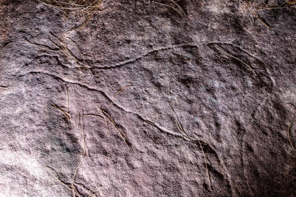 AWAT5072 LR Topham Trail Emu engraving