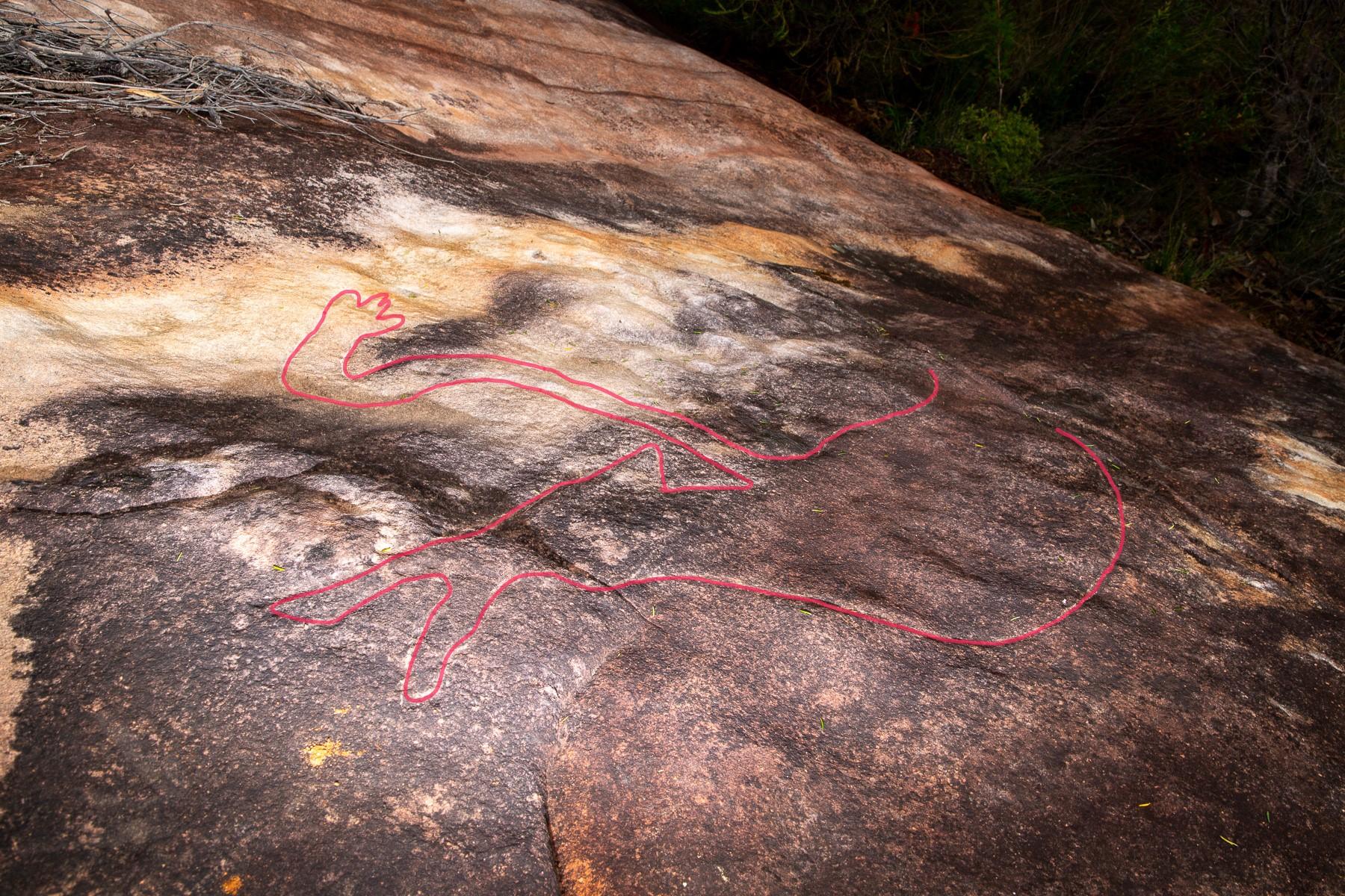 AWAT6244 LR highlighted Myall Trail - Animal Scene