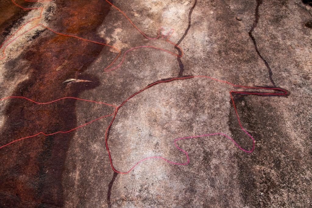 AWAT6535 LR Myall Trail - Animal Scene