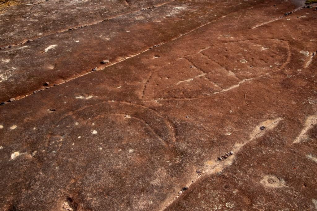 IMG 4612 LR Waratah Trail Shield