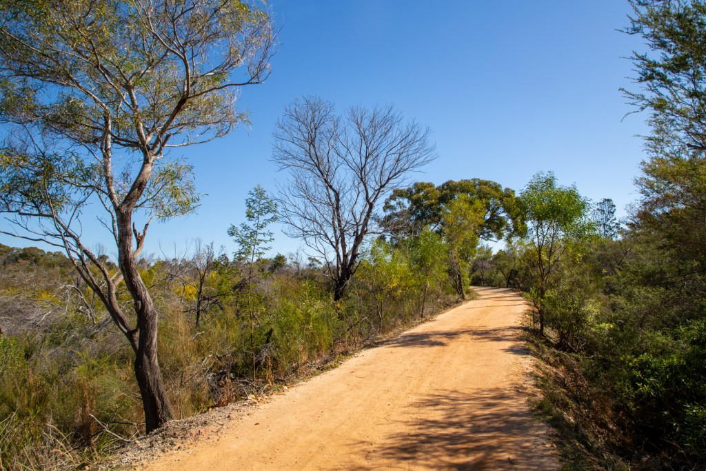 AWAT0074 LR Exploring the south of Red Hill Reserve