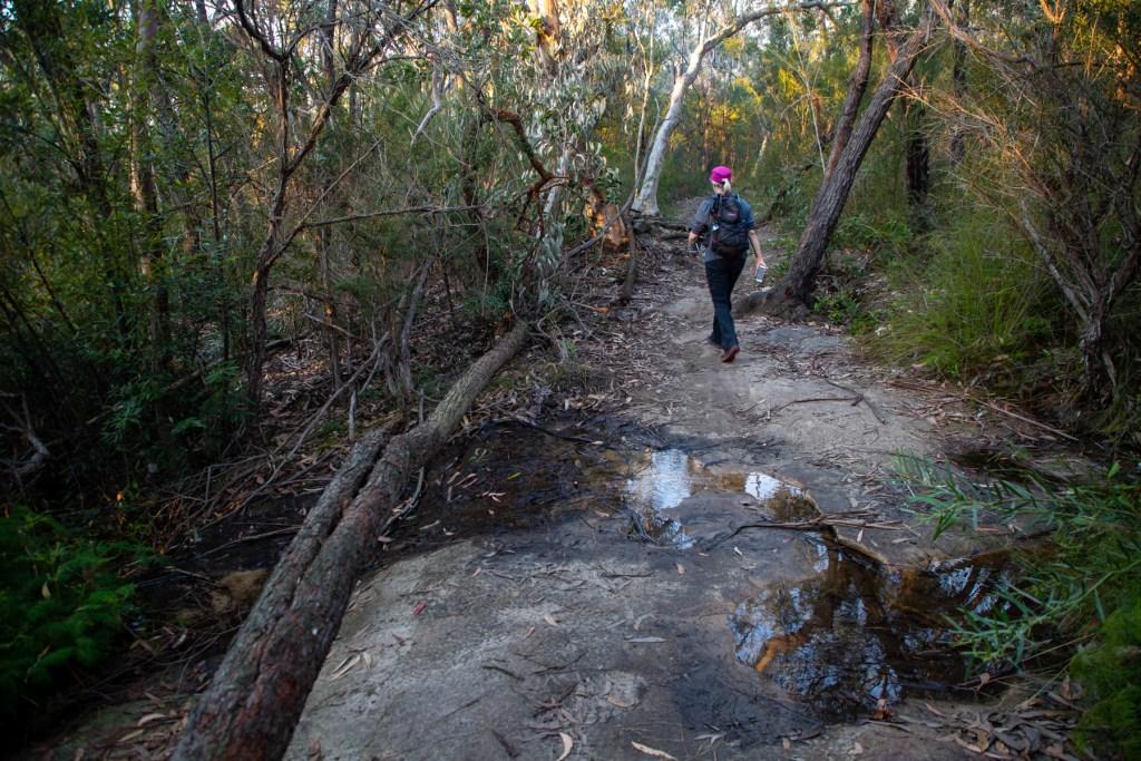 AWAT2526 LR Cooyong Neverfail Trail and Callamine Trail Loop