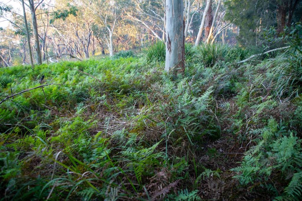 AWAT2533 LR Cooyong Neverfail Trail and Callamine Trail Loop