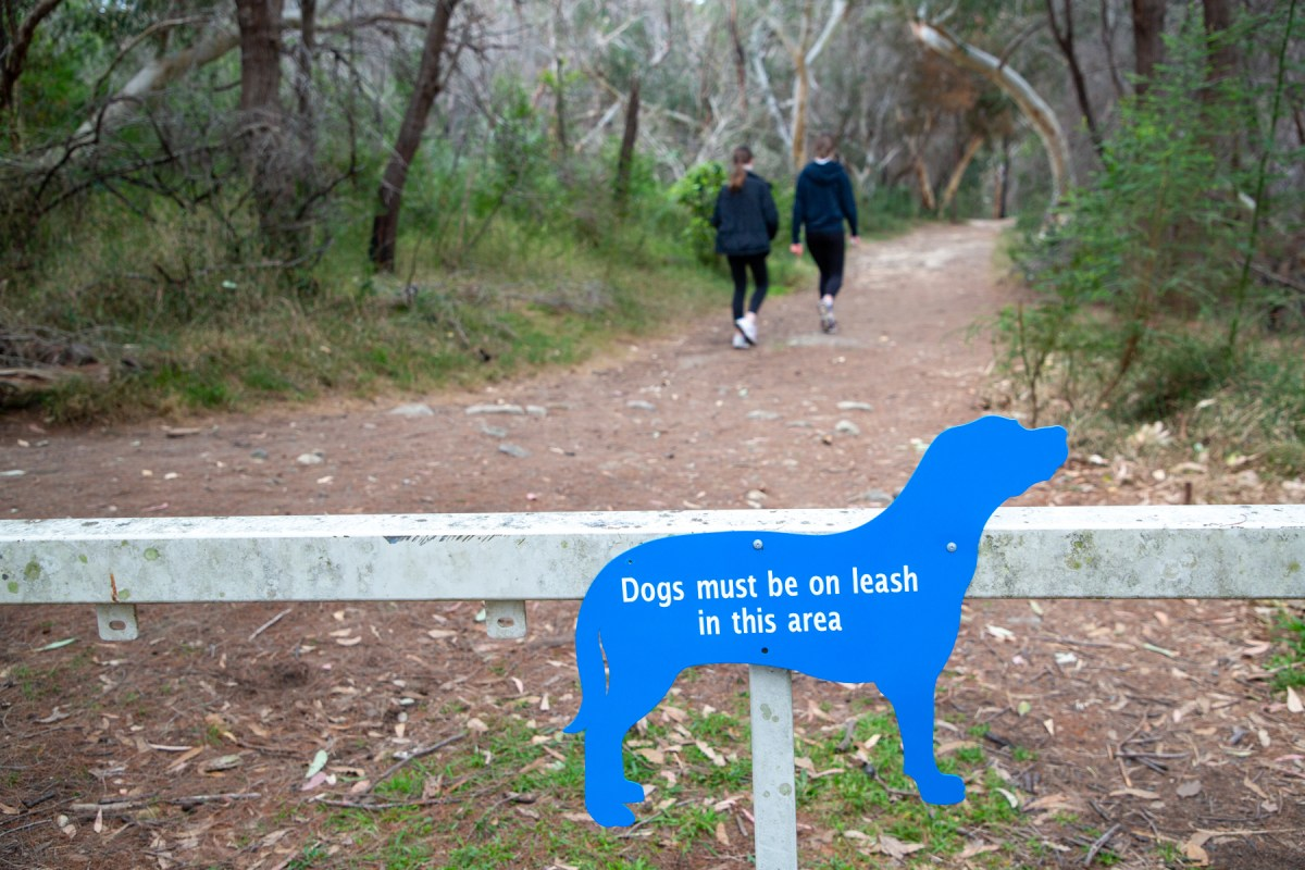 AWAT2801 LR Bushwalking with Dogs in Sydney's North