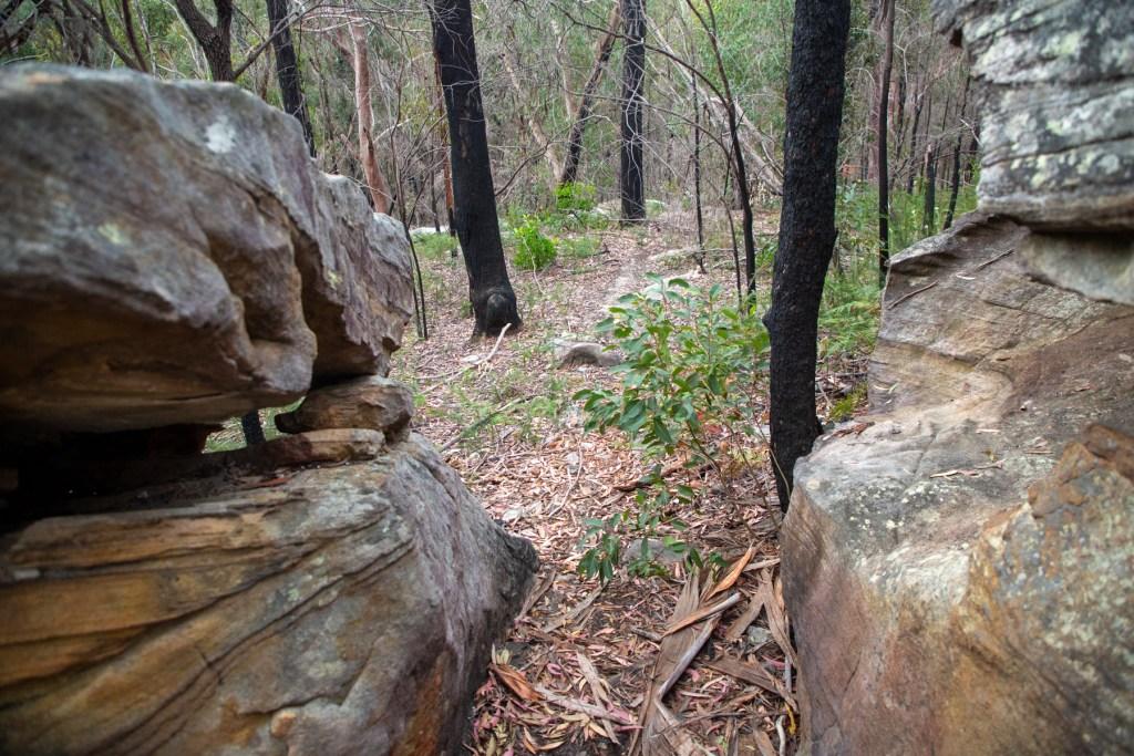 AWAT2814 LR Twin Creeks Reserve - a short but interesting loop walk