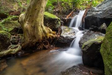 Peppermint Creek Cascades