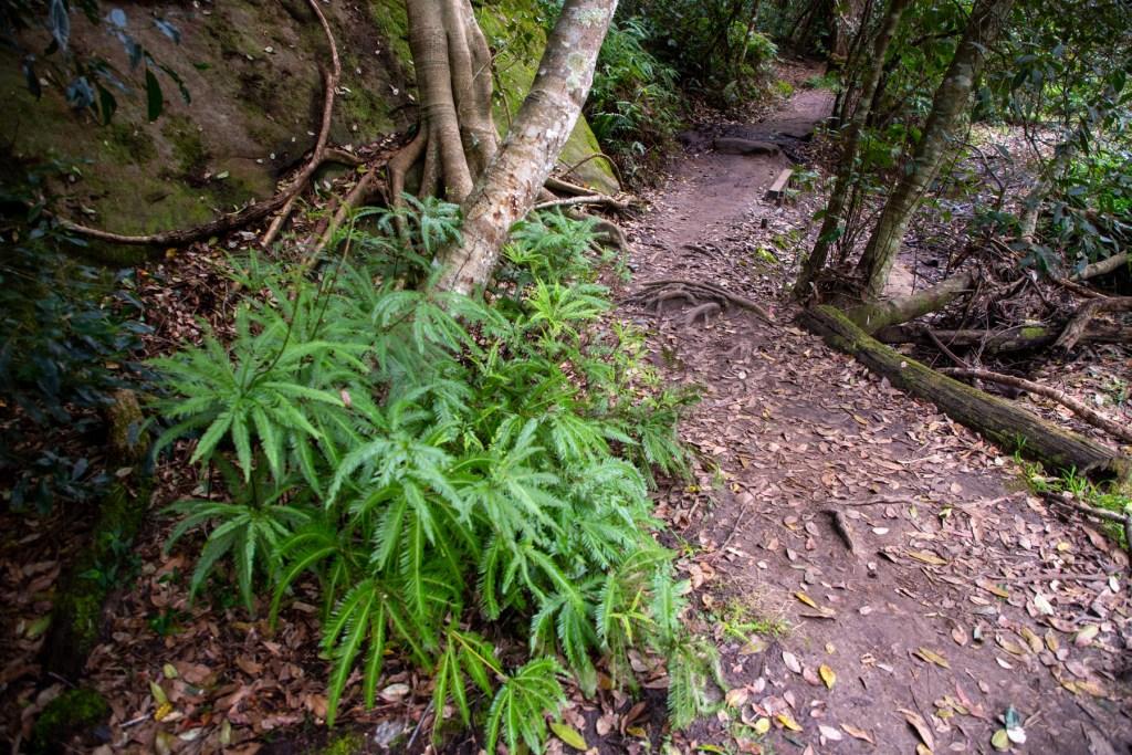 AWAT3305 LR Exploring Mullet Creek in Irrawong Reserve