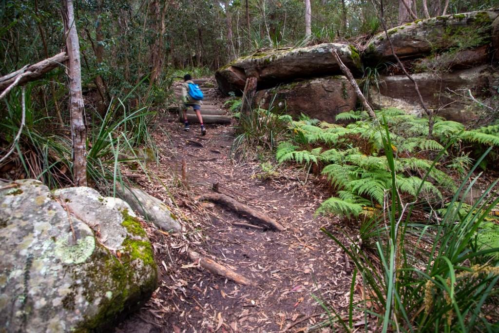 AWAT3326 LR Exploring Mullet Creek in Irrawong Reserve