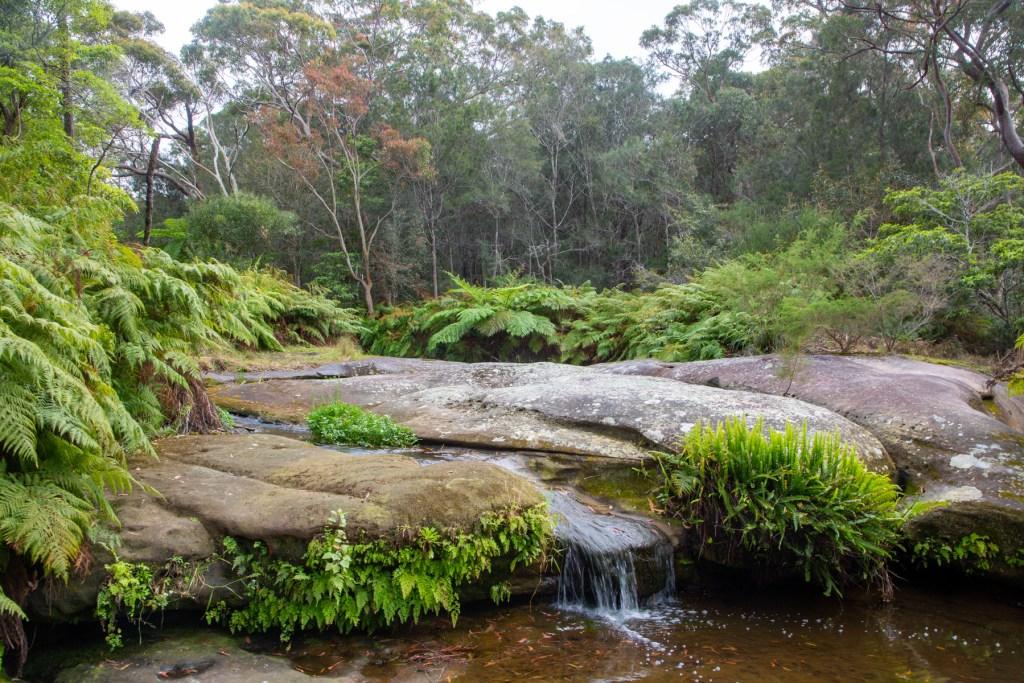 AWAT3551 LR Exploring Mullet Creek in Irrawong Reserve